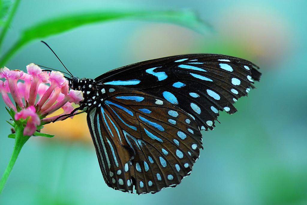 Papillons exotiques ma passion photo - Images de papillon ...